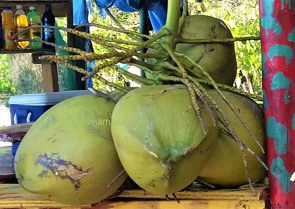 Coconut Jamaica