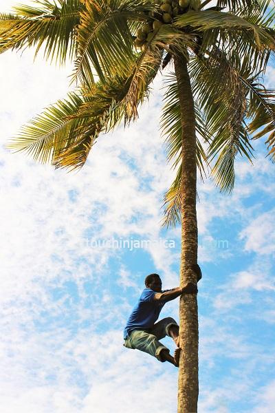 Plantagentouren Jamaika